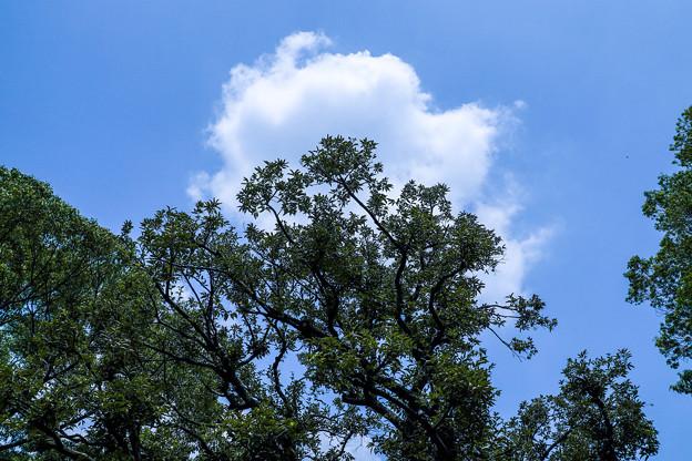 Photos: 夏の昼下がり