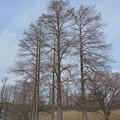 写真: 水元の木2