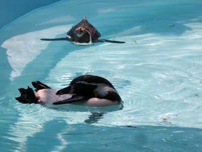 Photos: ペンギン1