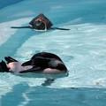 写真: ペンギン1