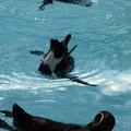 写真: ペンギン2