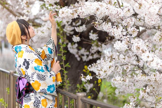 Photos: 咲羅レイン_20190407-23