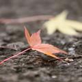 Photos: 枯葉