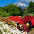 Photos: 美の饗宴