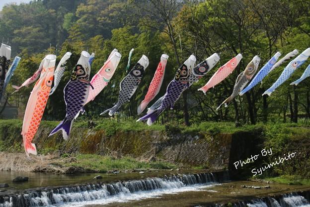 高瀬地区 鯉のぼり