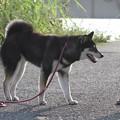 写真: たまちゃん お散歩