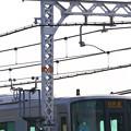 写真: 快速電車とハヤブサさん