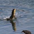 写真: 怪魚現るっ!
