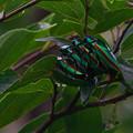 写真: 玉虫色のオーバードライブ