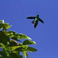 写真: 青空へGO