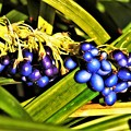 写真: 青い宝石