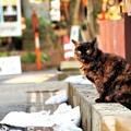 Photos: ニャン♪