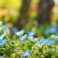 Photos: ブルーの輝き