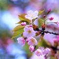 写真: 春色ピンク♪