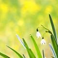 写真: 春色イエロー