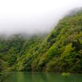 緑鮮やか室牧ダム湖