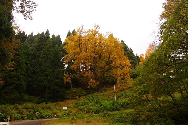 Photos: 今山田のおおかつら