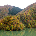 写真: 庄川の紅葉