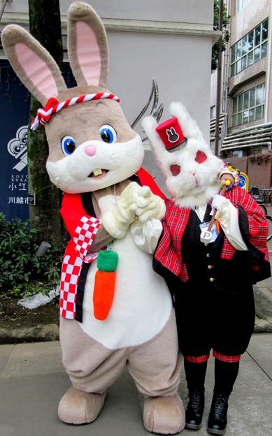 うさぎのどんちゃん と ウサギ人間