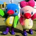 写真: カワセミのムーちゃん と サッちゃん