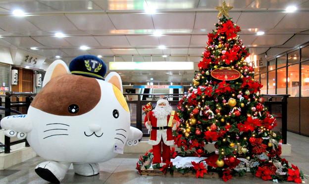 またたびくん と クリスマスツリー
