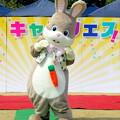 Photos: きゃらコレ05・うさぎのどんちゃん