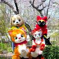 Photos: にゃん吉 と フレンド と 白火 と ねこ忍者☆かげ丸 と 春のひととき