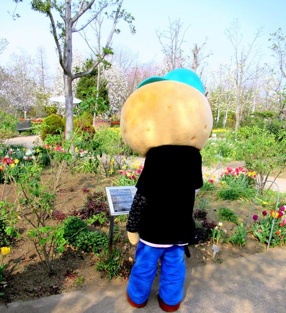 「サヨナラ」という花が気になった・・ひのじゃがくん