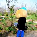 Photos: 「サヨナラ」という花が気になった・・ひのじゃがくん