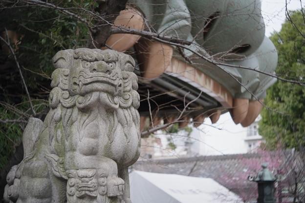 難波八坂神社の狛犬