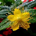写真: 最後のひと花