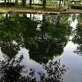 写真: 近くの公園1