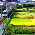 田園を走る小田急電車