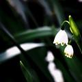 写真: 小さなランプ