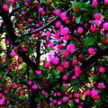 写真: pinkの空間