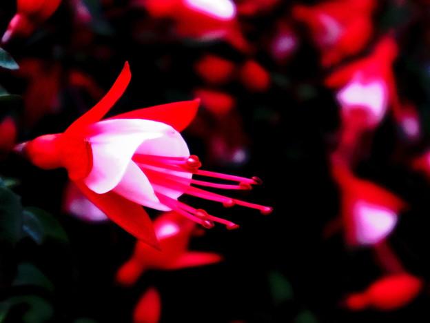 写真: 可愛いお花