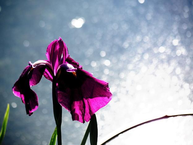 写真: 春から初夏へ
