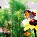 写真: 綺麗な翅