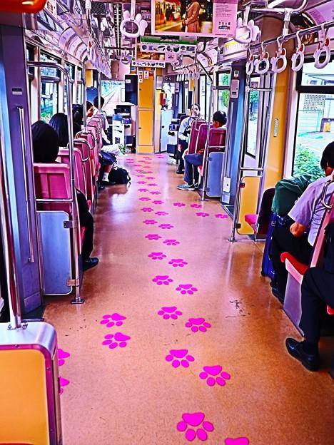 ニャンコ電車の中