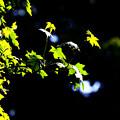 写真: 生命の輝き