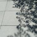 写真: 夏の影