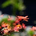 写真: 花うかがい
