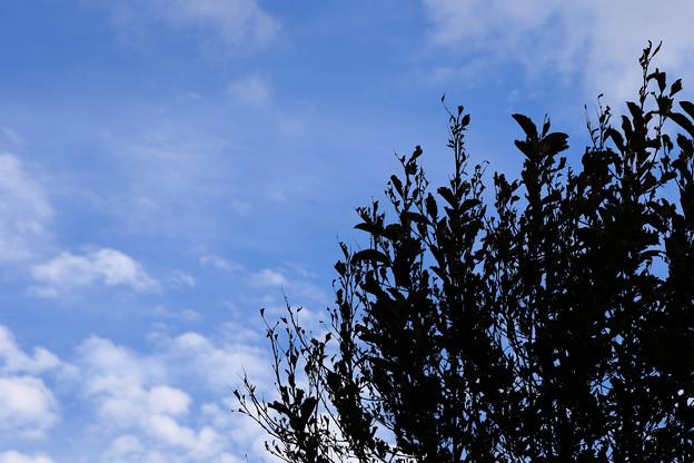 振り返ると秋空が