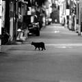 写真: 猫の道