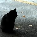 Photos: 猫の気持ち