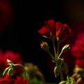 写真: 漆黒の赤