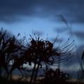 写真: 朝がまた来る