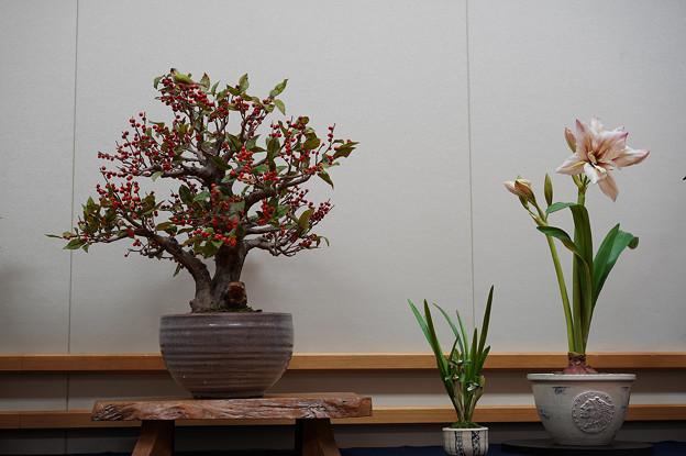 花遊び展1-4