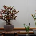 Photos: 花遊び展1-4