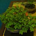 小盆栽展2-3